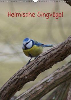 Heimische Singvögel (Wandkalender 2019 DIN A3 hoch) von kattobello
