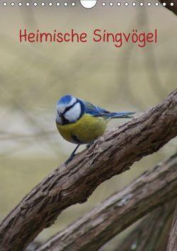 Heimische Singvögel (Wandkalender 2019 DIN A4 hoch) von kattobello