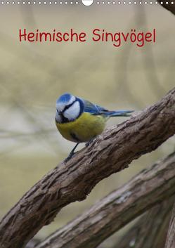 Heimische Singvögel (Wandkalender 2020 DIN A3 hoch) von kattobello