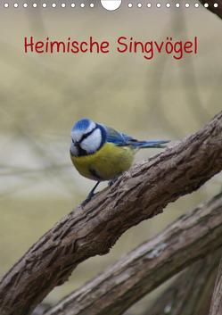 Heimische Singvögel (Wandkalender 2020 DIN A4 hoch) von kattobello