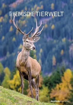 Heimische Tierwelt 2020 – Bildkalender (24 x 34) – Tierkalender – Wandkalender von ALPHA EDITION
