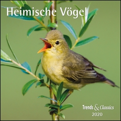 Heimische Vögel 2020 – Broschürenkalender – Wandkalender – mit herausnehmbarem Poster – Format 30 x 30 cm von DUMONT Kalenderverlag