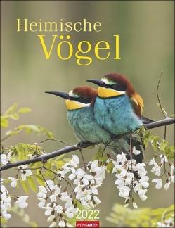 Heimische Vögel Kalender 2022 von Weingarten