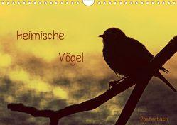Heimische Vögel (Posterbuch DIN A4 quer) von Otte,  Claudia