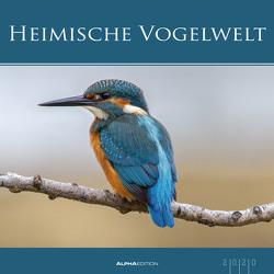 Heimische Vogelwelt 2020 – Bildkalender (33 x 33) – Vögel – Heimat – Tierkalender – Wandkalender von ALPHA EDITION