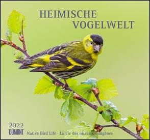 Heimische Vogelwelt 2022 – DUMONT Wandkalender – mit den wichtigsten Feiertagen – Format 38,0 x 35,5 cm