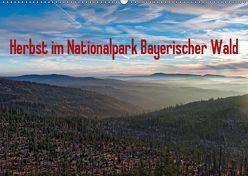 Herbst im Nationalpark Bayerischer Wald (Wandkalender 2019 DIN A2 quer) von Enders,  Borg
