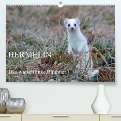 Hermelin – das wieselflinke Raubtier (Premium, hochwertiger DIN A2 Wandkalender 2020, Kunstdruck in Hochglanz) von Bachmeier,  Günter