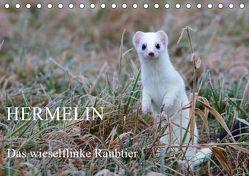 Hermelin – das wieselflinke Raubtier (Tischkalender 2019 DIN A5 quer) von Bachmeier,  Günter