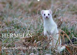Hermelin – das wieselflinke Raubtier (Wandkalender 2019 DIN A2 quer) von Bachmeier,  Günter