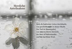 Herzliche Anteilnahme – Wenn Gott sein Ja und Amen spricht (weiße Rose) von Bräuning,  Heiko