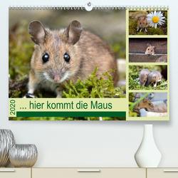 … hier kommt die Maus … (Premium, hochwertiger DIN A2 Wandkalender 2020, Kunstdruck in Hochglanz) von GUGIGEI