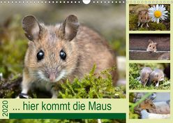… hier kommt die Maus … (Wandkalender 2020 DIN A3 quer) von GUGIGEI