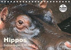 Hippos – Begegnungen in Afrika (Tischkalender 2019 DIN A5 quer) von Herzog,  Michael