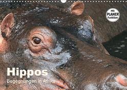Hippos – Begegnungen in Afrika (Wandkalender 2019 DIN A3 quer) von Herzog,  Michael