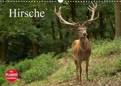 Hirsche (Wandkalender 2019 DIN A3 quer) von Klatt,  Arno