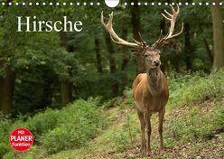 Hirsche (Wandkalender 2019 DIN A4 quer) von Klatt,  Arno