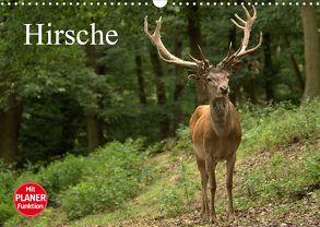 Hirsche (Wandkalender 2020 DIN A3 quer) von Klatt,  Arno