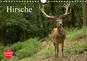Hirsche (Wandkalender 2020 DIN A4 quer) von Klatt,  Arno