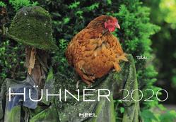 Hühner 2020 von Then,  Sandra