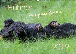 Hühner im eigenen Garten (Wandkalender 2019 DIN A2 quer) von Stephan,  Nicole