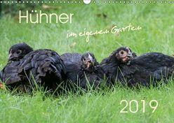 Hühner im eigenen Garten (Wandkalender 2019 DIN A3 quer)