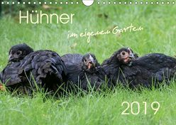 Hühner im eigenen Garten (Wandkalender 2019 DIN A4 quer)