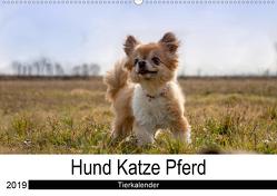 Hund Katze PferdAT-Version (Wandkalender 2019 DIN A2 quer) von Hutterer Fotografie,  Martha