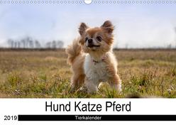Hund Katze PferdAT-Version (Wandkalender 2019 DIN A3 quer) von Hutterer Fotografie,  Martha