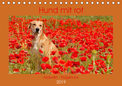 Hund mit rot – Azawakh – Ridgeback (Tischkalender 2019 DIN A5 quer) von Bölts,  Meike