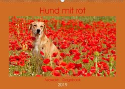 Hund mit rot – Azawakh – Ridgeback (Wandkalender 2019 DIN A2 quer) von Bölts,  Meike