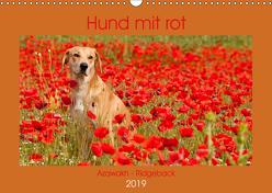 Hund mit rot – Azawakh – Ridgeback (Wandkalender 2019 DIN A3 quer) von Bölts,  Meike