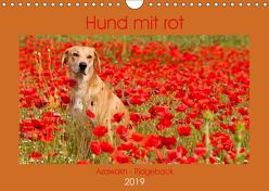 Hund mit rot – Azawakh – Ridgeback (Wandkalender 2019 DIN A4 quer) von Bölts,  Meike