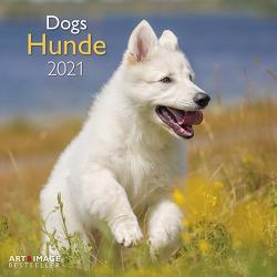 Hunde 2021 – Wand-Kalender – Broschüren-Kalender – A&I – 30×30 – 30×60 geöffnet