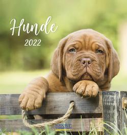 Hunde 2022 von Korsch Verlag