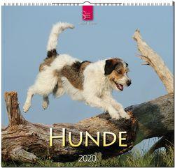 Hunde von Stuewer,  Sabine