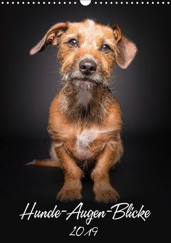 Hunde-Augen-Blicke (Wandkalender 2019 DIN A3 hoch) von Gareis,  Silke