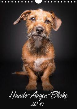 Hunde-Augen-Blicke (Wandkalender 2019 DIN A4 hoch) von Gareis,  Silke