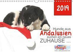 Hunde aus Andalusien suchen ein neues Zuhause … (Wandkalender 2019 DIN A4 quer) von Eckerl Tierfotografie www.petraeckerl.com,  Petra