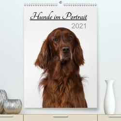 Hunde im Portrait (Premium, hochwertiger DIN A2 Wandkalender 2021, Kunstdruck in Hochglanz) von Bollich,  Heidi