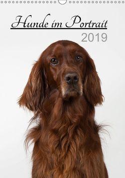 Hunde im Portrait (Wandkalender 2019 DIN A3 hoch) von Bollich,  Heidi