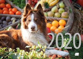 Hunde Rezept-Kalender 2020 von Esch-Völkel,  Sylvia