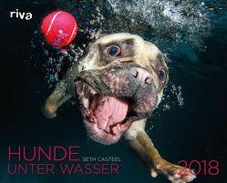 Hunde unter Wasser 2018 von Casteel,  Seth