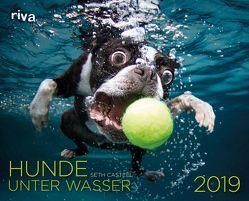 Hunde unter Wasser 2019 von Casteel,  Seth