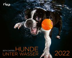 Hunde unter Wasser 2022 von Casteel,  Seth