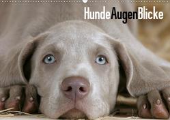 HundeAugenBlicke (Wandkalender 2021 DIN A2 quer) von Wegner,  Petra