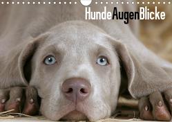 HundeAugenBlicke (Wandkalender 2021 DIN A4 quer) von Wegner,  Petra