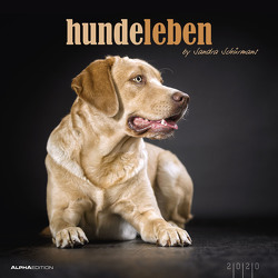 Hundeleben 2020 – Hunde – Dogs – Bildkalender (33 x 33) – Tierkalender – mit Zitaten – Wandkalender von ALPHA EDITION