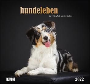 Hundeleben 2022 – DUMONT Wandkalender – mit den wichtigsten Feiertagen – Format 38,0 x 35,5 cm