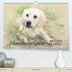 Hundewelpen 2020 (Premium, hochwertiger DIN A2 Wandkalender 2020, Kunstdruck in Hochglanz) von Redecker,  Andrea